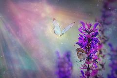 Paysage naturel de ressort floral avec les fleurs lilas roses sauvages sur le pré et les papillons de flottement sur le fond de c photographie stock