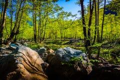 Paysage naturel du pays Turquie Photos stock