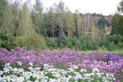 Paysage naturel, fond floral d'été Images libres de droits
