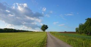Paysage naturel large dans des couleurs vert clair Image stock