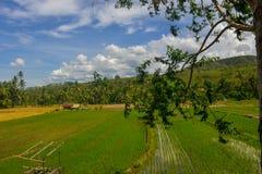 Paysage naturel stupéfiant avec des gisements de riz, des montagnes et des cieux bleus photo libre de droits