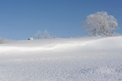 Paysage neigeux d'hiver avec un arbre au Hokkaido Photo libre de droits