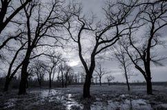 Paysage noir et blanc - forêt et marais d'automne Photographie stock