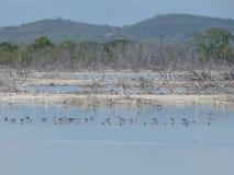 Paysage, oiseaux, Salt Lake, Porto Rico Photographie stock