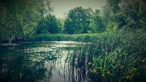 Paysage paisible Photo stock