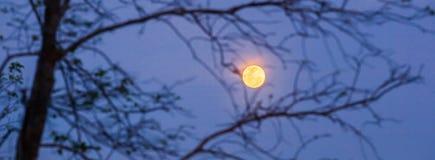 Paysage paisible de r?gion sauvage la nuit Ciel nocturne avec la pleine lune derri?re les branches nues brouill?es de l'arbre, mi photos libres de droits