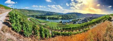Paysage panoramique avec des vignobles d'automne photos stock