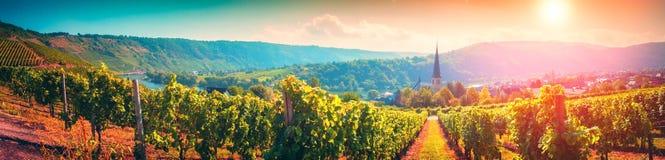 Paysage panoramique avec des vignobles d'automne La Moselle, Allemagne photos stock