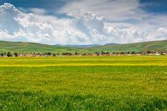 Paysage pastoral d'été Photo stock