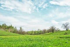 Paysage pittoresque avec l'herbe verte et les cirrus dans le jour ensoleillé d'été Image stock
