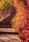Paysage pittoresque d'automne avec les arbres colorés photographie stock