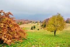Paysage pittoresque d'automne dans les montagnes avec le pré et les arbres colorés sur le premier plan et le brouillard au-dessus Images libres de droits