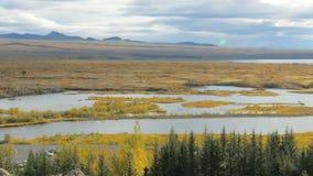 Paysage pittoresque de chute de rivière en parc islandais national avec l'herbe et la mousse jaunies banque de vidéos
