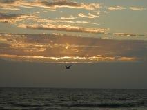 Paysage près d'Adelaïde, Australie Photos libres de droits