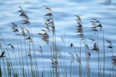 Paysage près de l'eau Images libres de droits