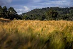 Paysage, quelques arbres et ciel image libre de droits