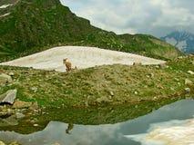 Paysage Réflexions photos stock
