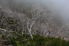 Paysage rampant montrant une forêt foncée brumeuse avec le tre blanc mort images stock