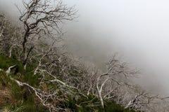 Paysage rampant montrant une forêt foncée brumeuse avec le tre blanc mort image libre de droits