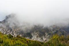 Paysage rampant montrant une forêt foncée brumeuse avec le tre blanc mort photo libre de droits