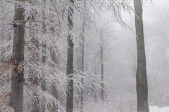 Paysage renversant, arbres givrés Photo libre de droits