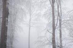 Paysage renversant, arbres givrés Image libre de droits