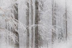 Paysage renversant, arbres givrés Photos stock