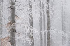 Paysage renversant, arbres givrés Photographie stock libre de droits