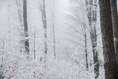 Paysage renversant, arbres givrés Images libres de droits
