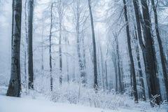 Paysage renversant, arbres givrés Photos libres de droits