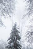 Paysage renversant, arbres givrés Photographie stock