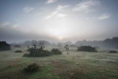 Paysage renversant de lever de soleil d'aube dans la nouvelle campagne brumeuse de forêt photo stock