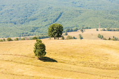 Paysage roumain de montagne image stock