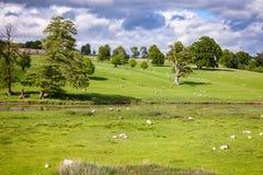 Paysage rural anglais avec frôler des moutons photo stock
