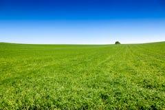 Paysage rural anglais idyllique photo libre de droits