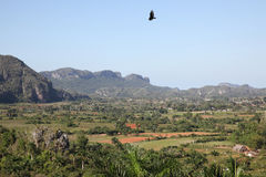 Paysage rural au Cuba, Vinales Photos stock