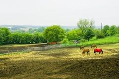 Paysage rural avec des chevaux Image stock