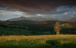 Paysage rural avec l'arbre et les montagnes isolés sur le fond image stock