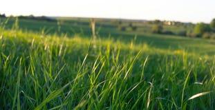Paysage rural avec l'herbe photos stock