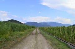 Paysage rural avec la route Photos stock