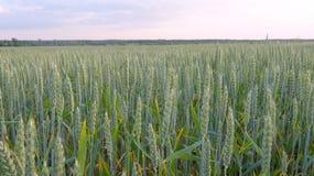 Paysage rural avec le champ Photo stock