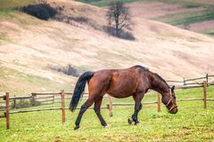 Paysage rural avec le cheval photos stock
