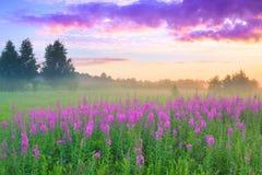 Paysage rural avec le lever de soleil et le pré de floraison photo libre de droits