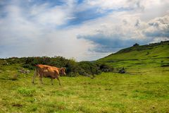 Paysage rural avec le troupeau de vaches Photos stock