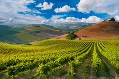 Paysage rural avec un vignoble vert parmi des collines photos stock