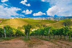Paysage rural avec un vignoble vert parmi des collines photos libres de droits