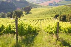 Paysage rural avec un vignoble vert parmi des collines images stock