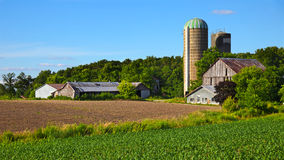 Paysage rural classique d'Ontario Photographie stock