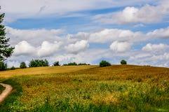 Paysage rural coloré vibrant image libre de droits