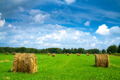 Paysage rural d'été photo stock